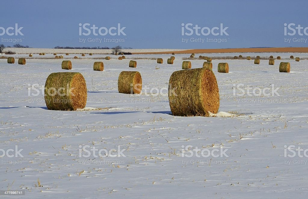 Bales of Hay in Winter stock photo