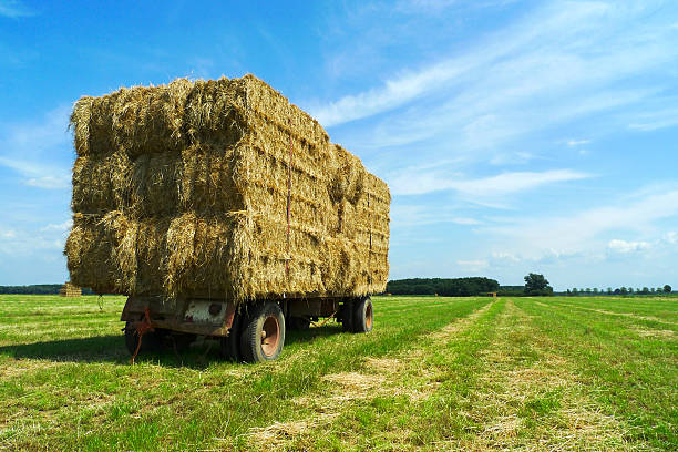 Bales of hay on a trailer stock photo