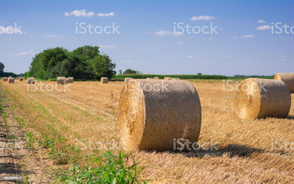 Bales of straw on the field royalty-free stock photo