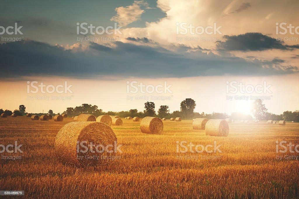 Bales auf dem Feld – Foto