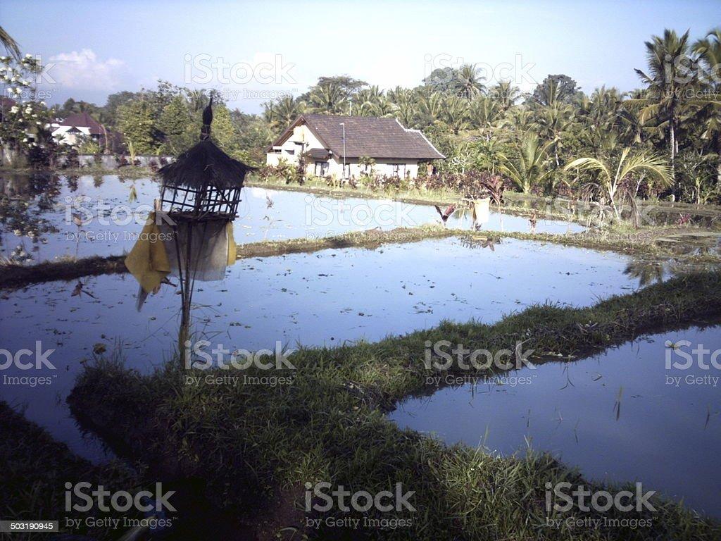 Bali at Dawn stock photo