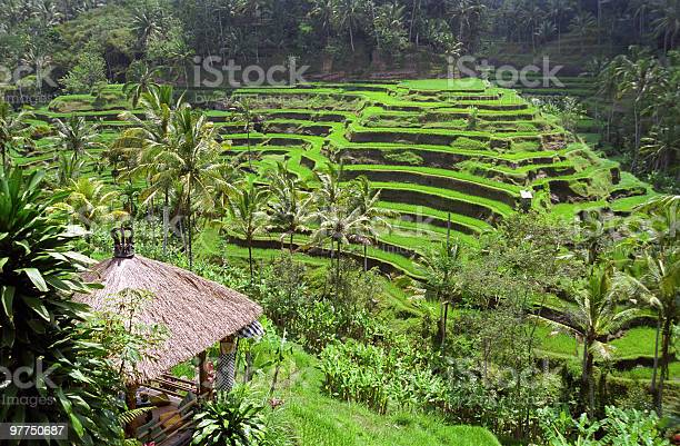Bali Indonesia Landscape Stock Photo - Download Image Now