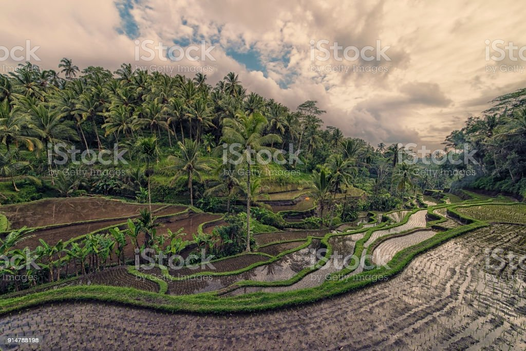 Bali landscape at evening stock photo