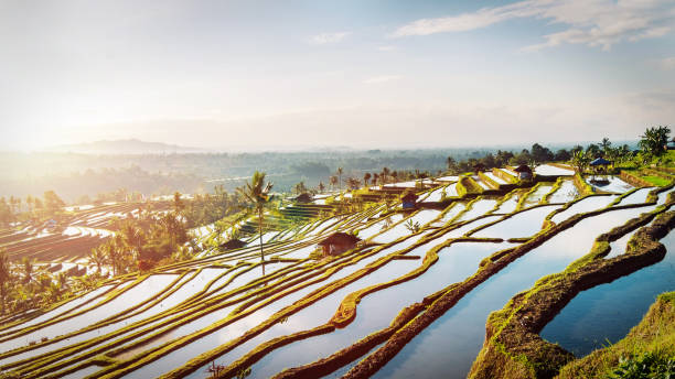 Bali Rice Terraces. Bali Rice Terraces. The beautiful and dramatic rice fields of Jatiluwih in southeast Bali have been designated the prestigious UNESCO world heritage site. indonesia stock pictures, royalty-free photos & images