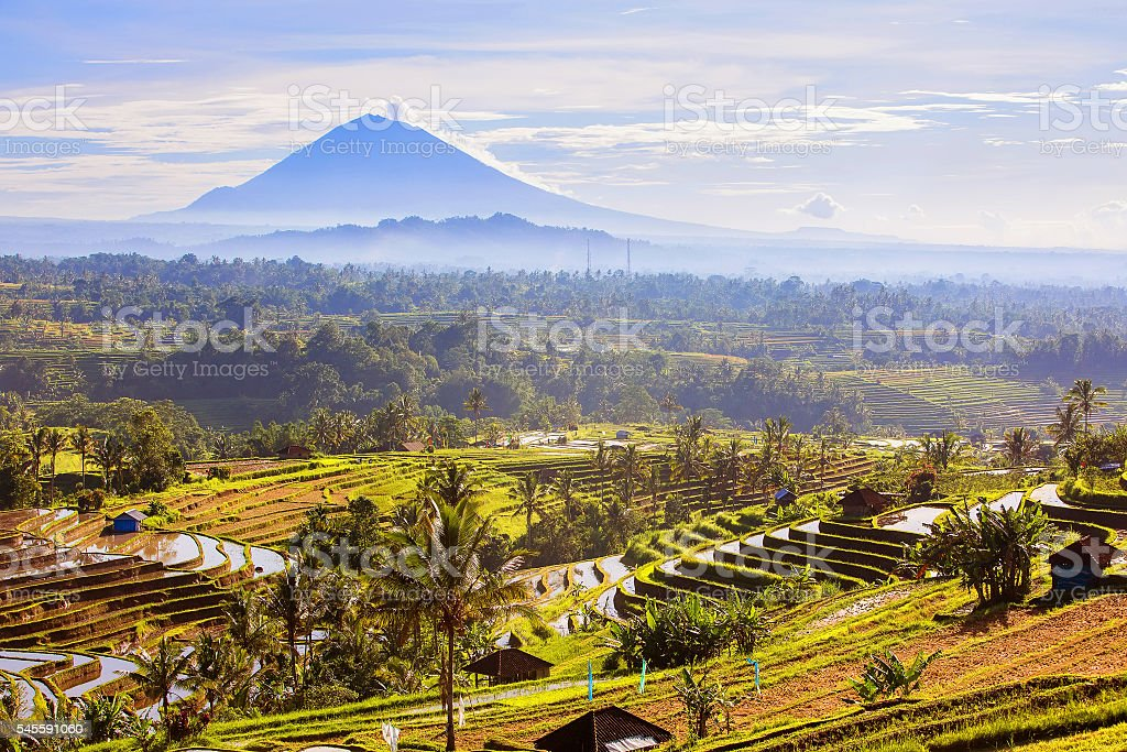 Bali Rice Terraces. Rice fields of Jatiluwih stock photo