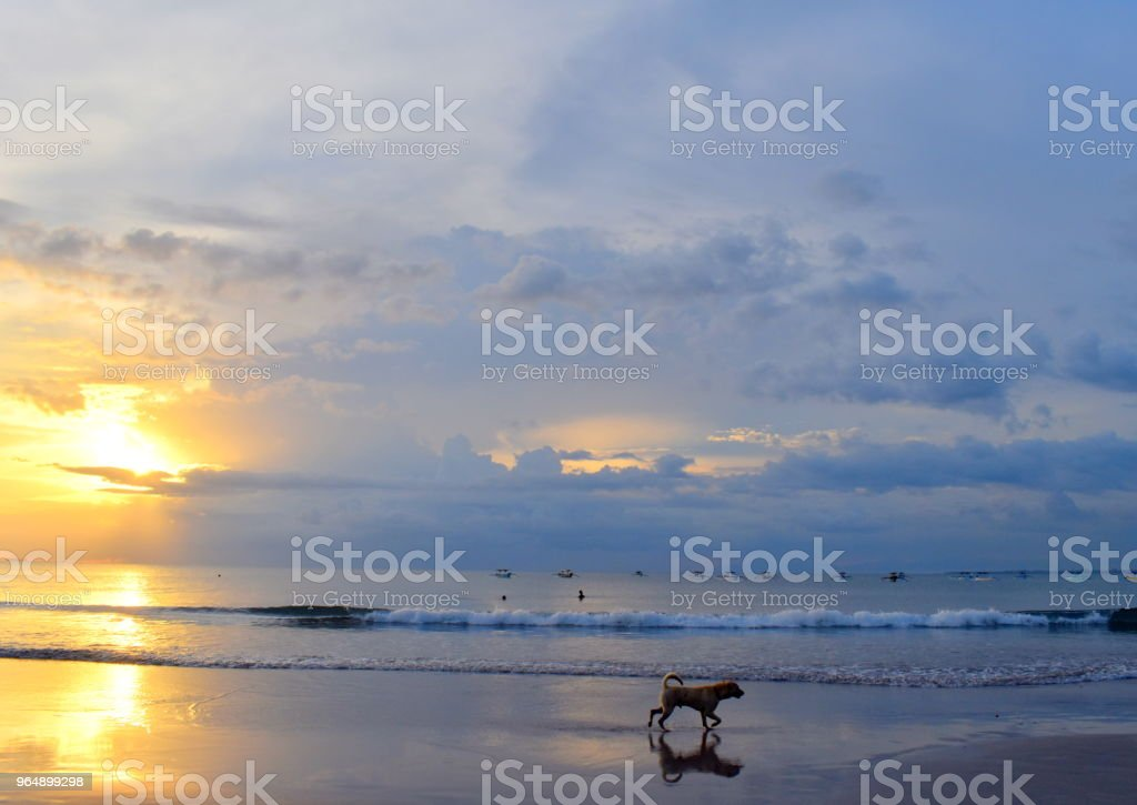 bali sunset  beach dog royalty-free stock photo
