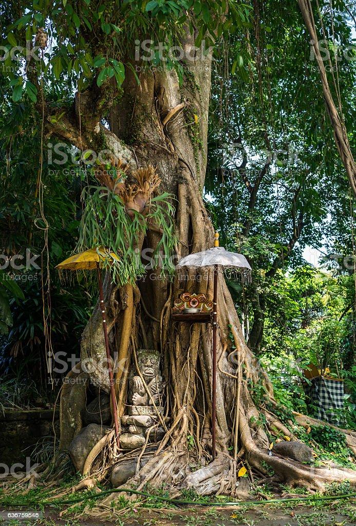 Balinese banyan holy tree in Ubud, Bali. stock photo