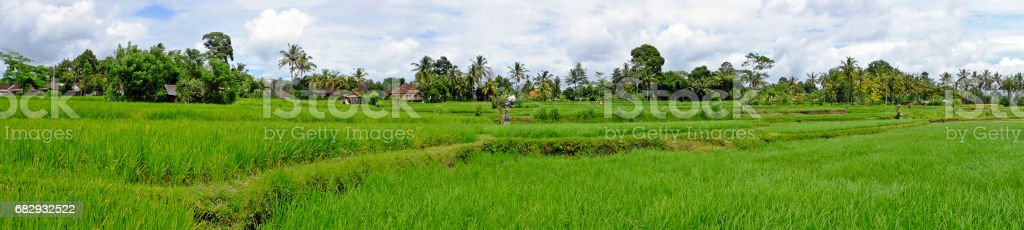 Balinese landscape with rice fields in Indonesia Asia royalty-free stock photo