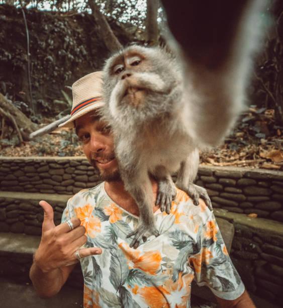 balinese monkey takes selfie with a tourist - macaco foto e immagini stock