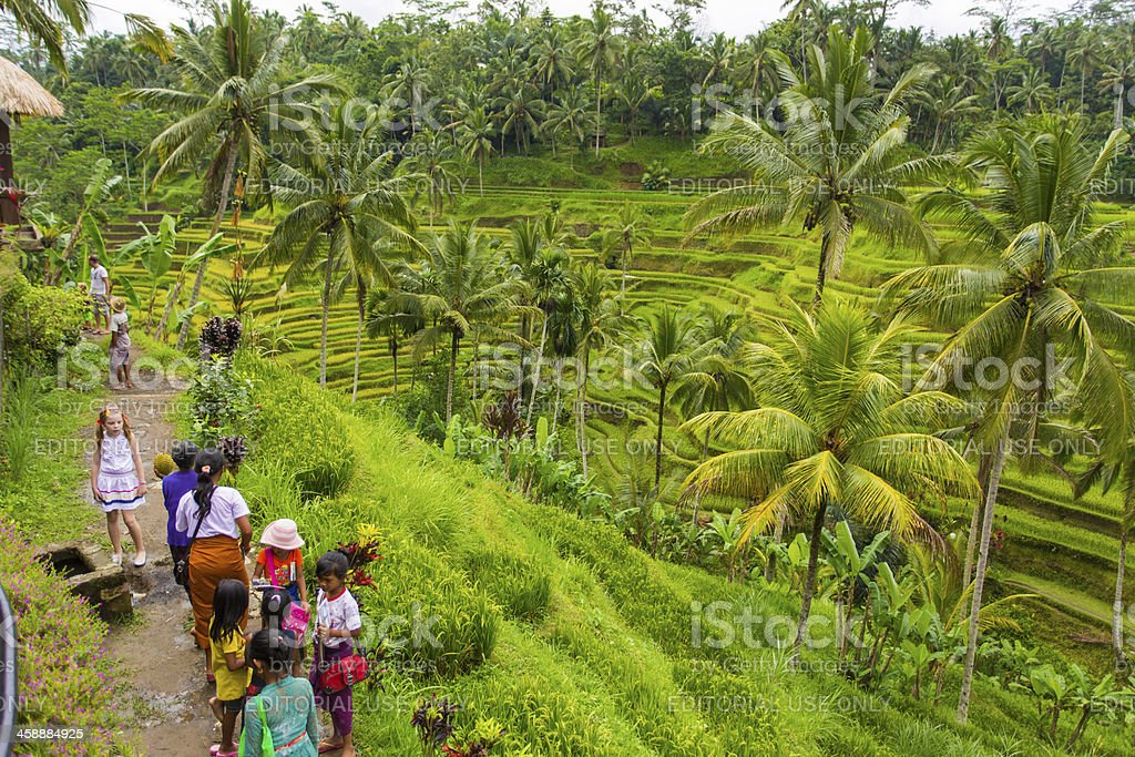Balinese Rice Paddy Hawkers royalty-free stock photo