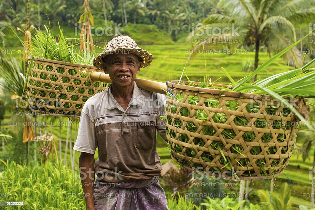 Balinese Rice Paddy Terraces and Farmer royalty-free stock photo