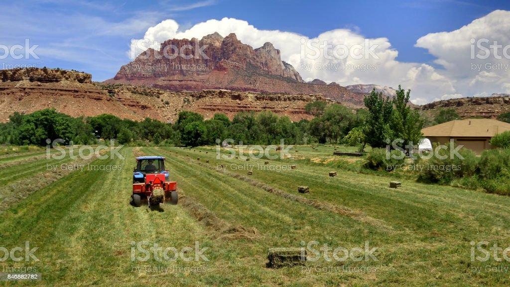 Baling hay below red rocks of Mt Kinesava in Zion National Park in Rockville Utah stock photo