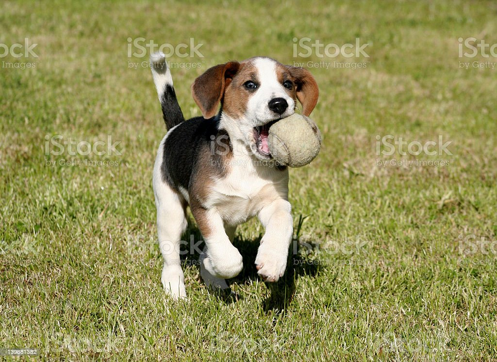 Ball Boy royalty-free stock photo