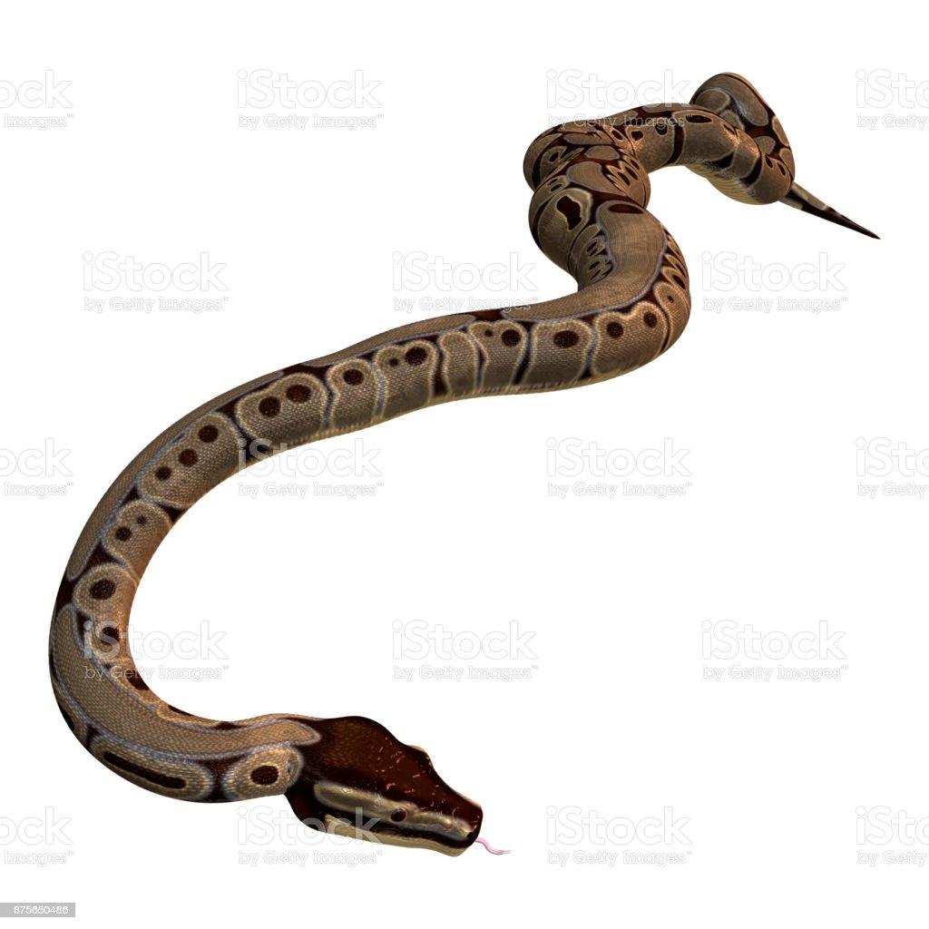 Fotografía de Serpiente De Pitón Bola En Blanco y más banco de ...