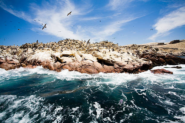 Ballestas Inseln, Peru – Foto