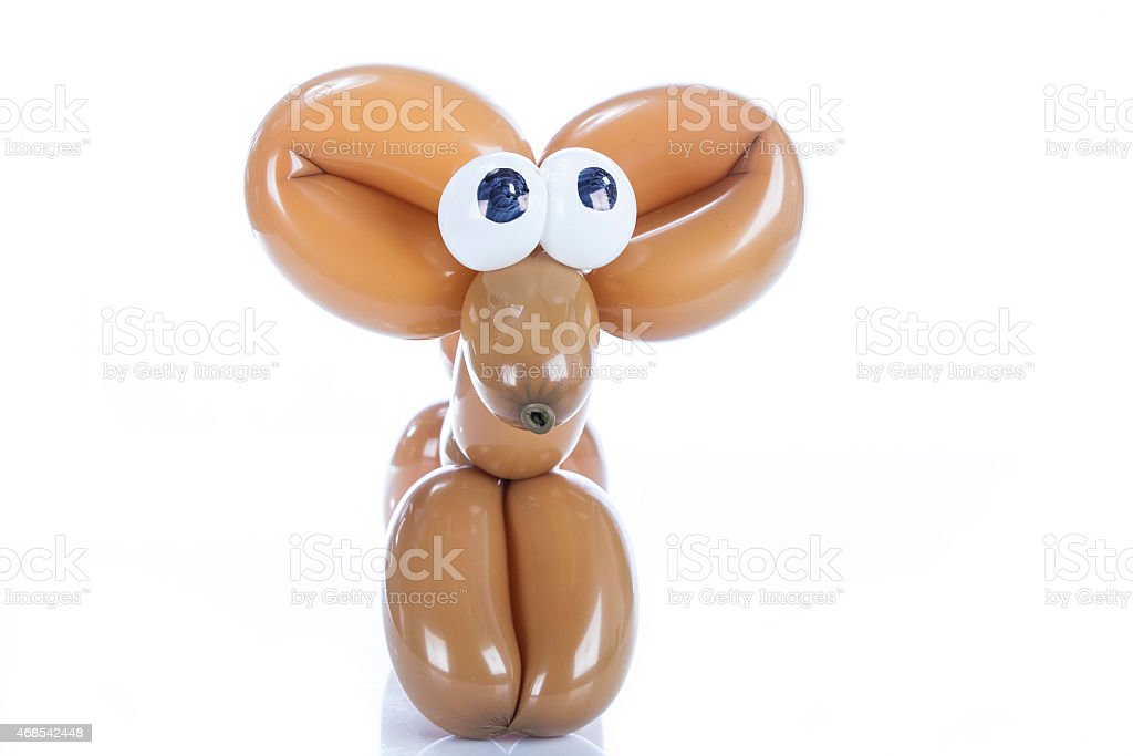 Balloon dog Chihuahua isolated on white stock photo