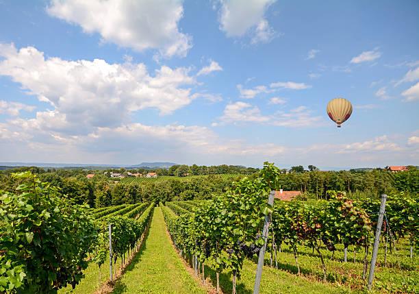 ballon fliegt über wein trauben in den weinbergen vor ernte - burgenland stock-fotos und bilder