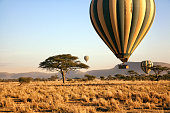 Three hot air balloons drift over the plains of The Serengeti National Park at dawn.