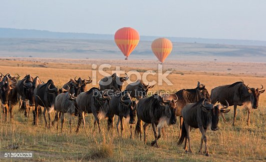 Classic Kenya safari landscape with wildebeest herd foreground and hot air balloon backdrop – Masai Mara, Kenya