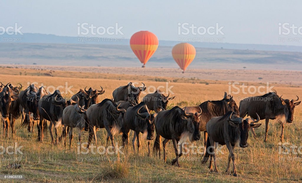 Balloon safari stock photo