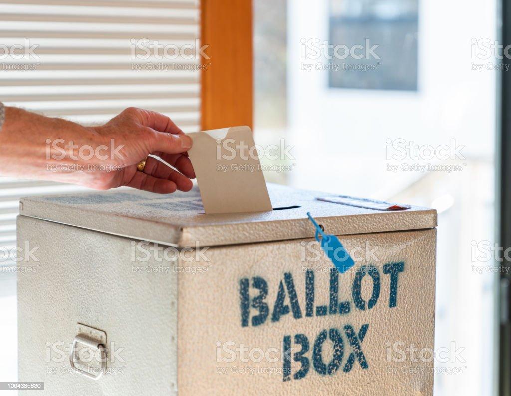 ballot-box-pussy