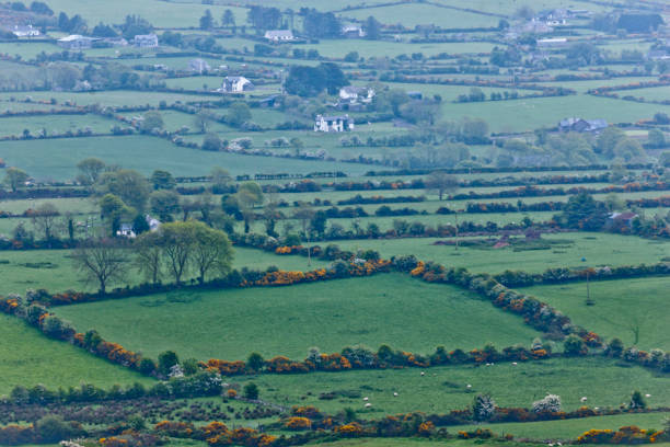 Ballycoly Farmlands from  Slievenaglogh One late May morning, perched on the slope of Slievenaglogh I captured this far view, the orderly fields of Ballycoly Townland, foreground, with sheep pastures, windbreaks of flowering hawthorn (white) and Whin bush (yellow).  Glenmore townland is in background. michael stephen wills Slievenaglogh stock pictures, royalty-free photos & images