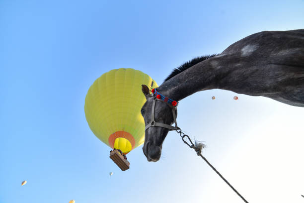 Baloons in the sky and the psychological gaze of the horse picture id1085386822?b=1&k=6&m=1085386822&s=612x612&w=0&h=9pxj nzs28us0ouhm2qkjurtxshkxqnckdcgm7bfezs=