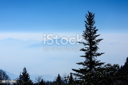 istock Balsam Tree Mountain View 667114590