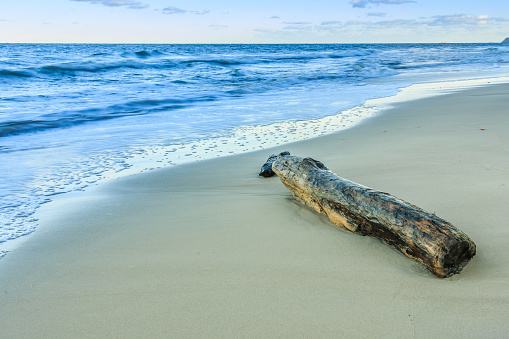 Sandy beach on the Baltic Sea. Idyllic stretch of beach with small waves in the evening and old washed up tree trunk. Autumn mood on the island of Ruegen with blue sky on the horizon