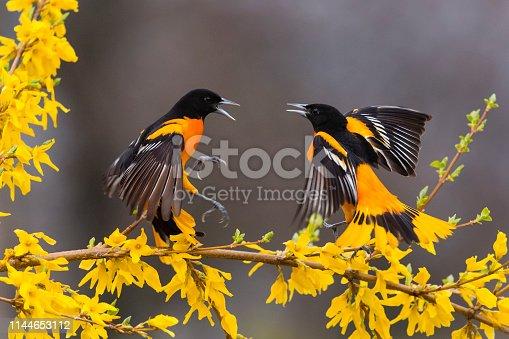 Birds in springtime.