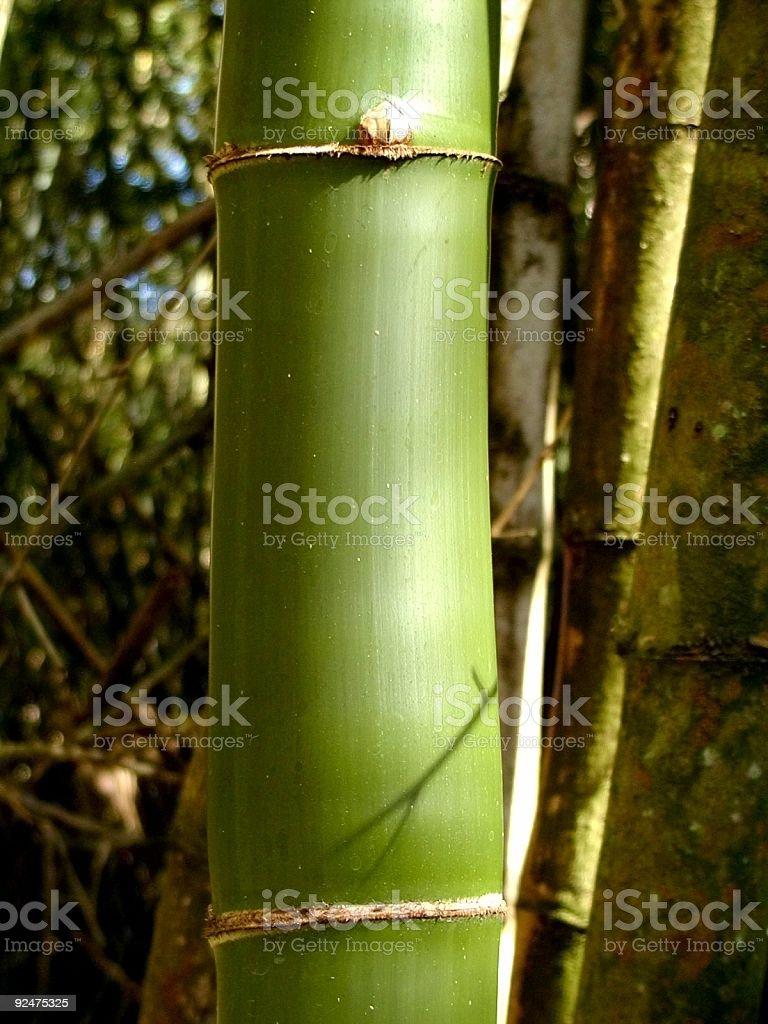 Bamboo 2 royalty-free stock photo