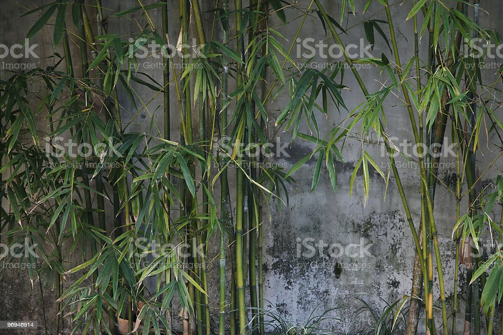 Bamboo against grey wall royalty-free stock photo