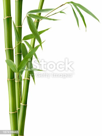 Green Bamboo and Leaves on White.