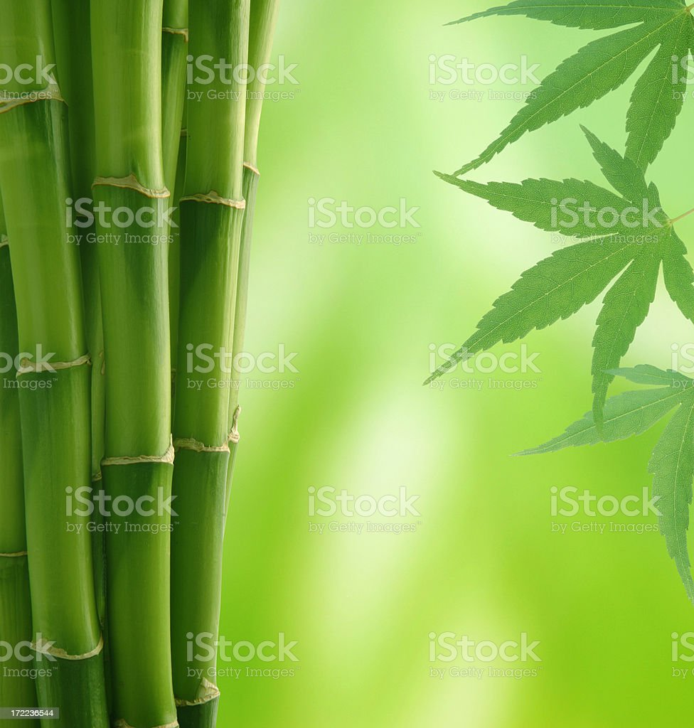 Bamboo and Maple Leaves royalty-free stock photo