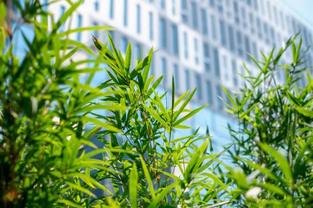 Bambus und Bürogebäude – Foto