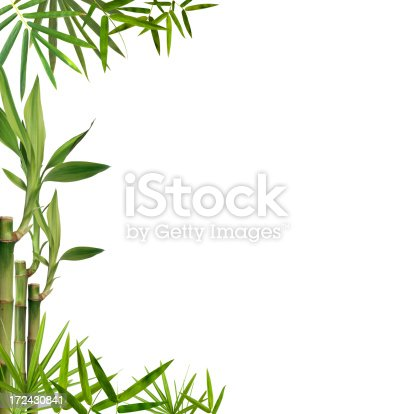 Background of isolated bamboo leaves and branches with copy space.Similar choices below: