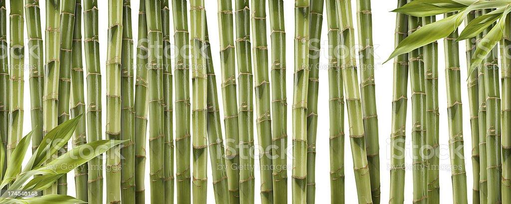 Bambus-Hintergrund - Lizenzfrei Ast - Pflanzenbestandteil Stock-Foto