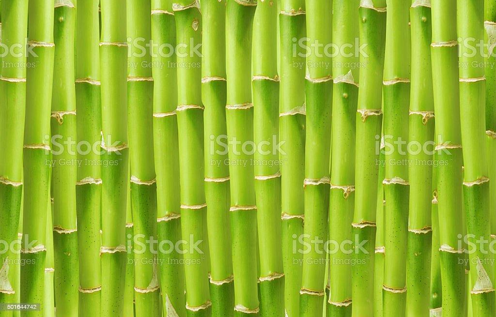 Fondo de bambú - foto de stock