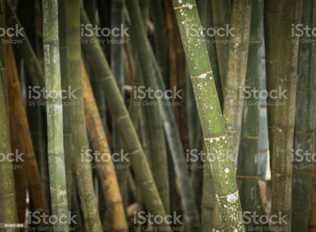 bamboo background zbiór zdjęć royalty-free