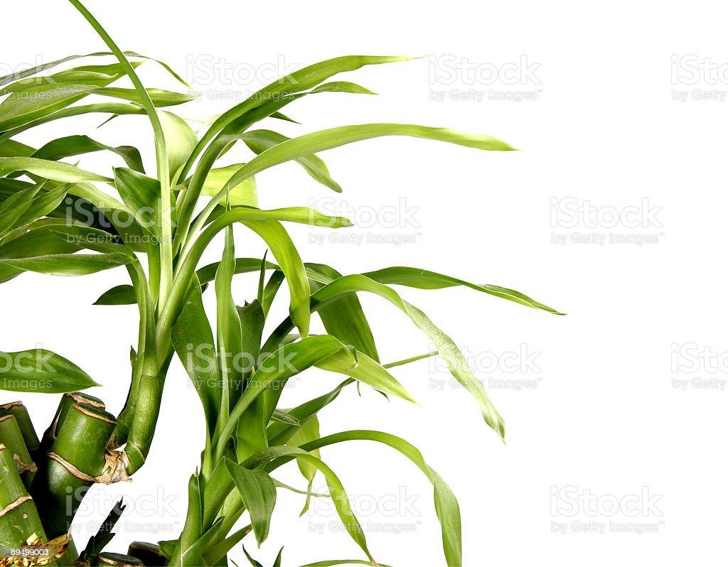 bamboo background royaltyfri bildbanksbilder