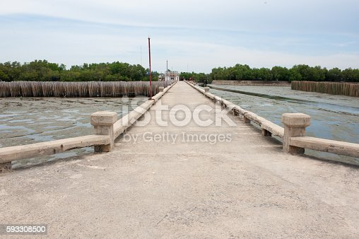 Bamboo barrier protect the mangrove forest shore.