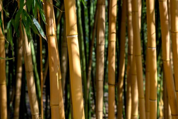 Bambus-Bars – Foto