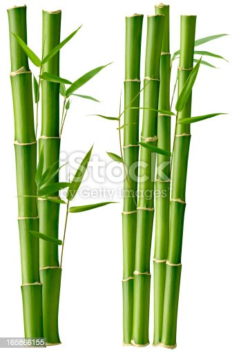 Bamboo Stalks with Leaves, isolated on a white background.