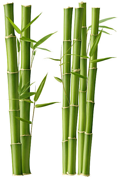Bamboo Beauty圖像檔