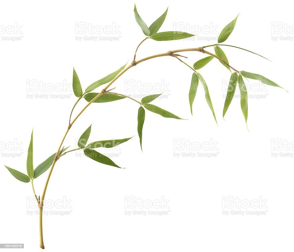 Derivación de bambú - foto de stock