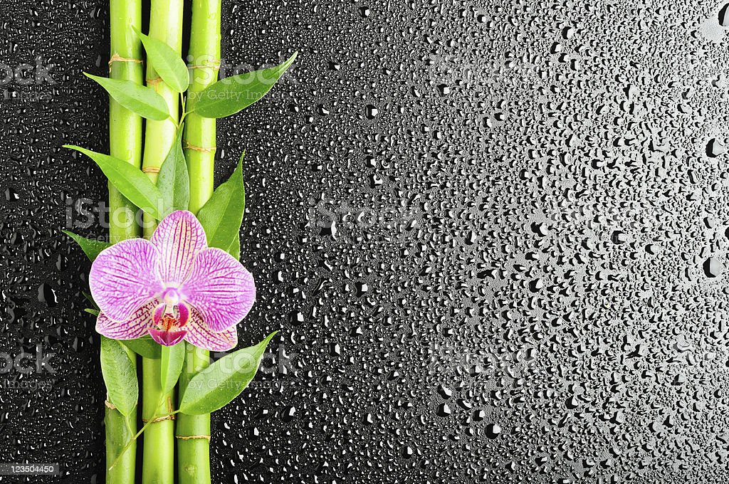 Bamboo branches and an orchid lying on a wet gray surface royalty-free stock photo