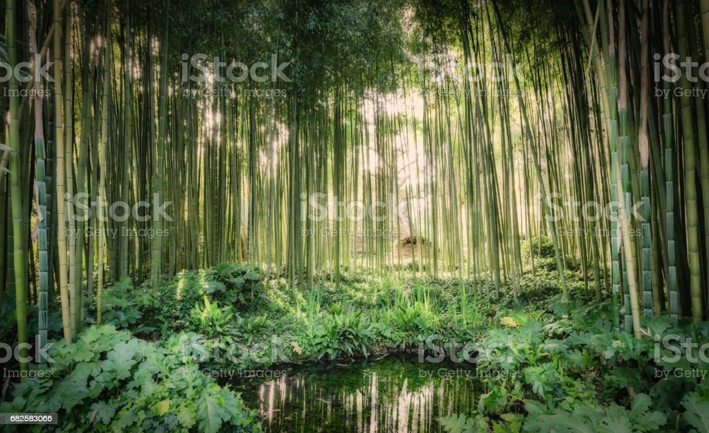 Bamboo canes around a small lake stock photo