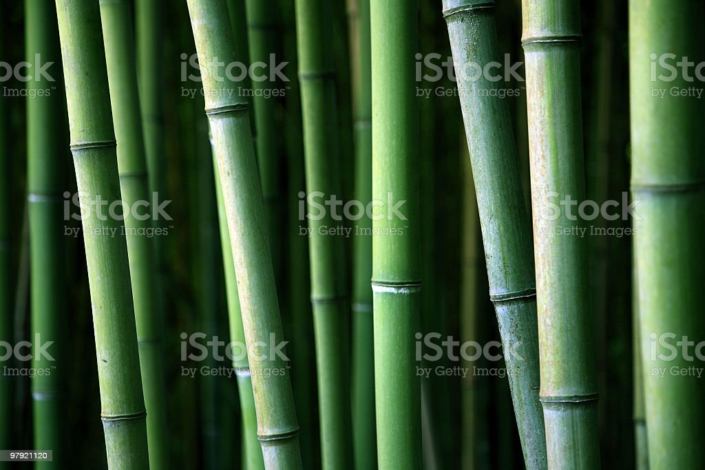 Bamboo canes royalty-free stock photo