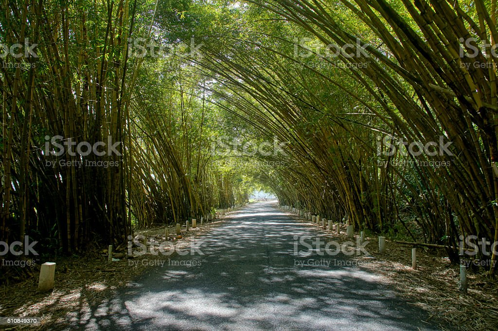 Bamboo Canopy in Gamboa Panama in Central America stock photo