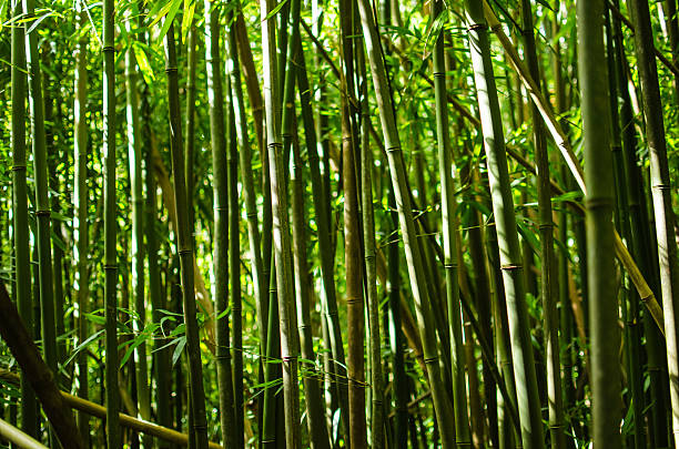 Bamboo close-up stock photo